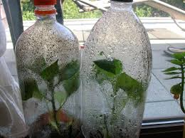 recycle a plastic bottle into a very simple mini greenhouse for