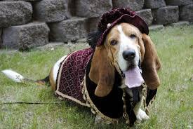 pet costumes custom renaissance tudor royal ringbearer dog pet costume