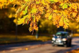 thanksgiving weekend driving tips my bulkley lakes now