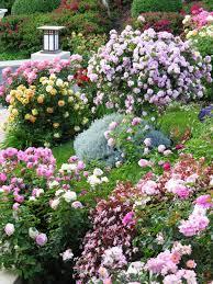 rose garden with outdoor lights and shrubs stunning rose garden