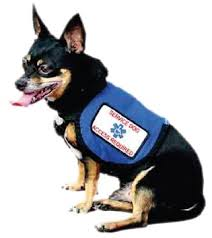 Comfort Pet Certification The Laws We All Need To Know About Service Dogs Tulsapets