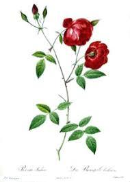 china with roses china roses
