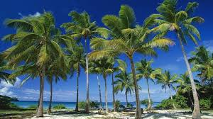 interesting facts about palm trees just facts