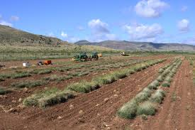 planting native grasses native grasses a reclamation and remediation natural