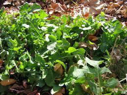 native plants albuquerque local food albuquerque special vegetables for new mexico