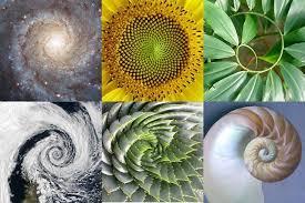 golden ratio dna spiral the divine code and the golden ratio wisemovement