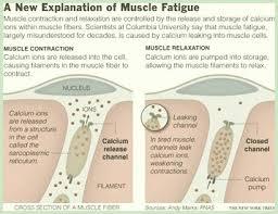 muskelschwäche muskelschwäche vitamine für die nerven und muskeln fascinatio
