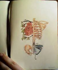 skeleton rib cage flowers copic butterfly