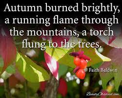 Autumn Memes - autumn memes beauty observed