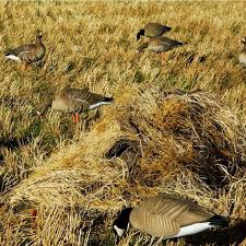 Avery Finisher Layout Blind Best 25 Layout Blinds Ideas On Pinterest Goose Blind Window