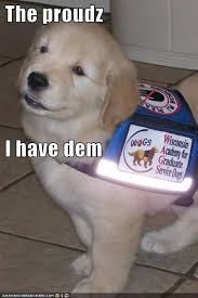Golden Retriever Meme - i has a hotdog golden retriever funny dog pictures dog memes