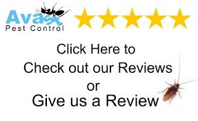 reviews orlandos best pest control team