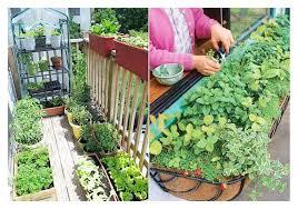 intensive gardening layout i4 vegetable gardening ideas on apartment