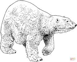 walking polar bear coloring page free printable coloring pages