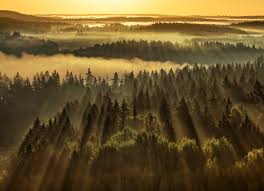 wallpapers with forests photo wallpapers forest wallpapers forest sunbeams wall mural