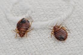 Bed Bug Cleaning Services How To Clean Laundry Infested With Bedbugs