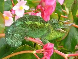plants native to hawaii cpsp359i geol388i geology ecology and energy on hawaii