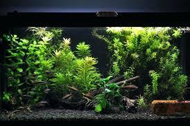 marineland aquatic plant led lighting system w timer 48 60 led planted aquarium lighting marineland aquatic plant led aquarium