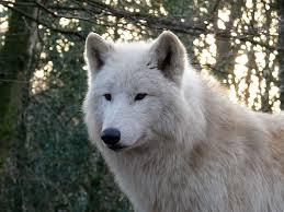 14 dog u0027s wild relatives mental floss