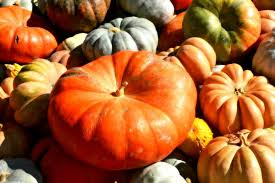 thanksgiving season free images fall ripe orange food harvest produce