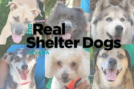 dogs for adoption in las vegas nevada unleashed