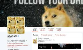 Doge Meme Tumblr - 5 seconds of summer just revived the doge meme for some strange reason