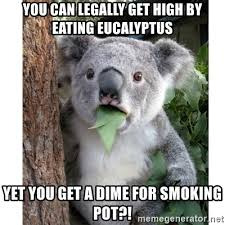 High Koala Meme - you can legally get high by eating eucalyptus yet you get a dime