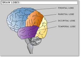 Part Of The Brain Stem That Is Involved In Arousal How To Be An Etutor
