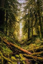 free photo oregon landscape forest trees free image on