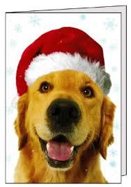 cheap retriever christmas find retriever christmas deals on line