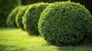 Residential Landscaping Services by Home Marlton Lawn Cutting Residential Landscaping And Mulching