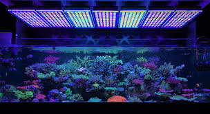 led aquarium lights for reef tanks amazing japanese reef tank under atlantik v4 led lighting orphek
