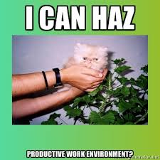 Stupid Animal Memes - study stupid photos of adorable cats boost workplace productivity