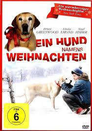 Tierheim Bad Salzuflen Hunde Die 15 Größten Irrtümer Im Umgang Mit Hunden Tiermedizinportal