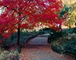 red tree etsy