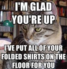 Cat Internet Meme - internet memes love them or hate them they can serve a purpose