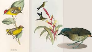 lost birds the search to rediscover species that might not yet be