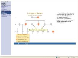 incomplete dominance worksheet super teacher worksheets