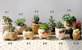 Cheap Small Flower Pots - cheap ceramic orchid flower pots find ceramic orchid flower pots