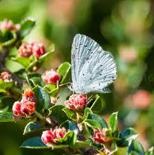 di walker butterfly gallery