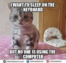 Grumpy Cat Sleep Meme - sad cat memes funny cute angry grumpy cats memes pinterest sad