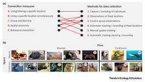 animal social network theory can help wildlife conservation