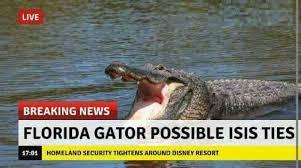 Alligator Memes - dopl3r com memes live breaking news florida gator possible