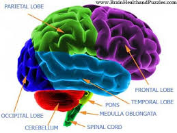 What Is The Main Function Of The Medulla Oblongata The Brain Geek Parts Of The Brain