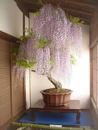 15 of the most beautiful bonsai trees