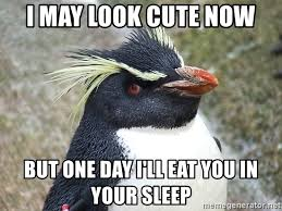 Cute Penguin Meme - i may look cute now but one day i ll eat you in your sleep so what