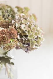 dried flowers decorating with dried flowers how to flowers and infuse them