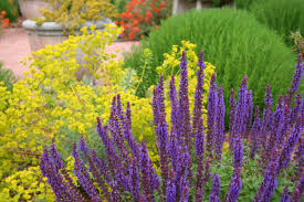 california native plant garden design mediterranean garden design how to create a tuscan garden