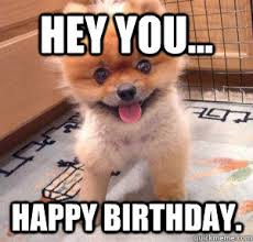 Happy Birthday Dog Meme - funny happy birthday meme for love one funny memes