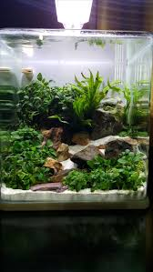 Aquarium For Home by Best 20 Betta Tank Ideas On Pinterest Betta Aquarium Betta